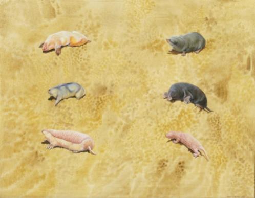 "From ""Astonishing Animals"""