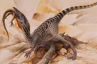Compsognathus-longipes-Small-Web-view Quotation Form Example on marks periods, advertisement for insurance,