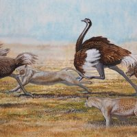 End of the Megafauna - Asiatic Ostrich & Eurasian Lion