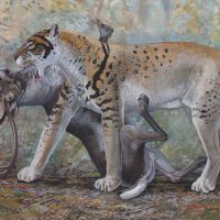 End of the Megafauna - Scimitar Cat & Reindeer