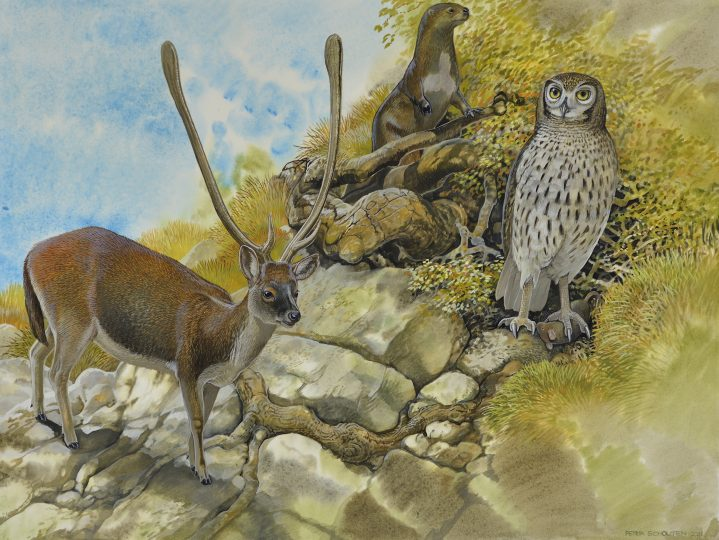 End of the Megafauna - Cretan Deer, Cretan Owl, Mouse, Cretan Otter