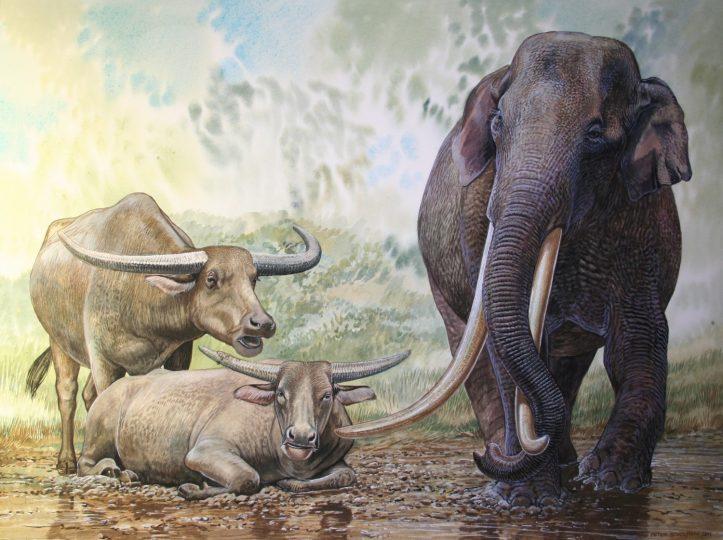 End of the Megafauna - Long-horned Javan Buffalo, Javan stegodon
