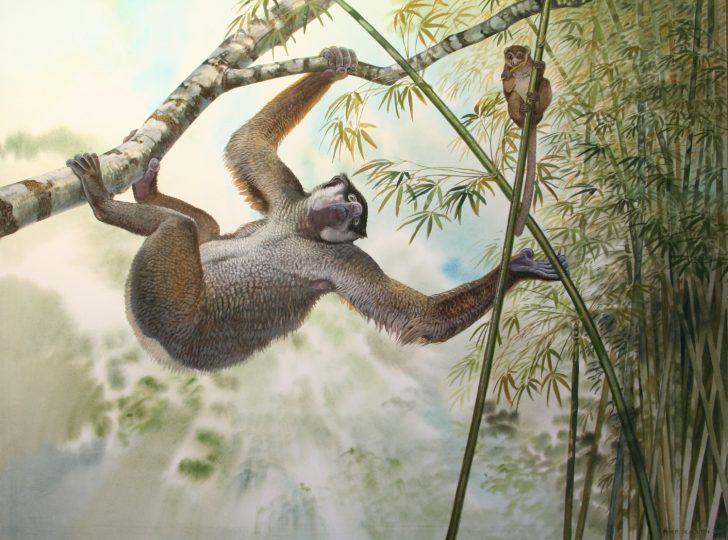 End of the Megafauna - Giant Sloth Lemur, Eastern Grey Lemur