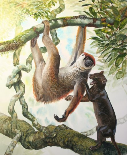 End of the Megafauna - Sloth lemur, Giant Fossa