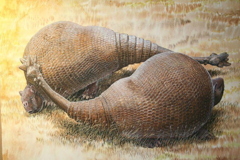 End of the Megafauna - Doedicurus
