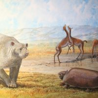 End of the Megafauna - Pampean Bear, Pampean Long-legged Llama, Glyptodont