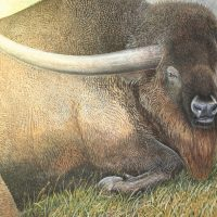 End of the Megafauna - Lorn Horned Bison