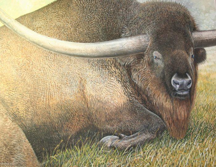 End of the Megafauna - Lorn Horned Bison