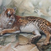 End of the Megafauna - Sabre-tooth Cat