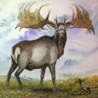 End of the Megafauna - Gian Deer, Ring-neck Pheasant