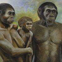 Megafauna - Homo Erectus