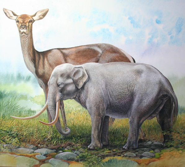 End of the Megafauna - Dwarf Cyprus Elephant, Cyprus Deer
