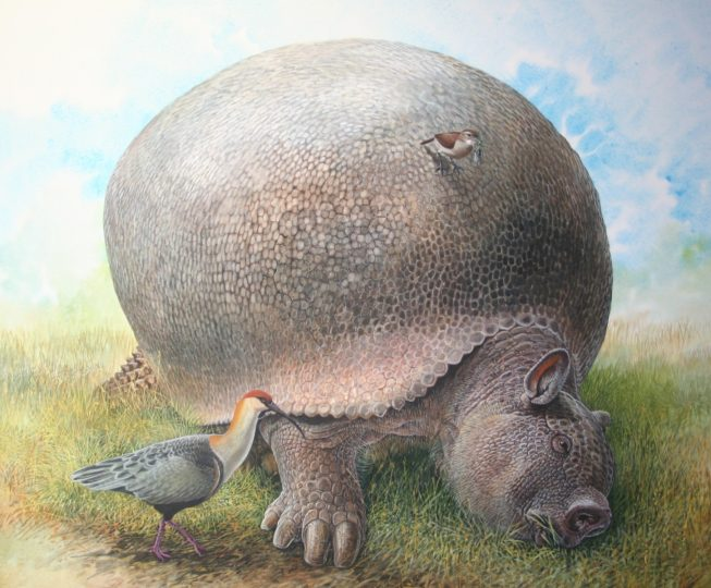 End of the Megafauna - Glyptodon, Rufous Ovenbird, Buff-necked Ibis
