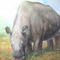 End of the Megafauna - Toxodon, Campo Miner