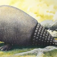 End of the Megafauna - Panochthus