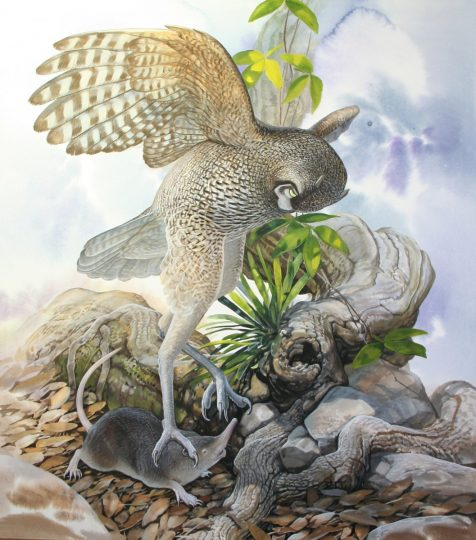 End of the Megafauna - Giant Running Owl, Cuban Solenodon