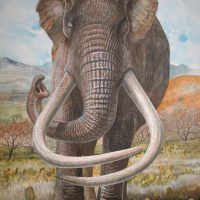 End of the Megafauna - Columbian Mammoth
