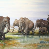 End of Megafauna - Woolly Mammoth