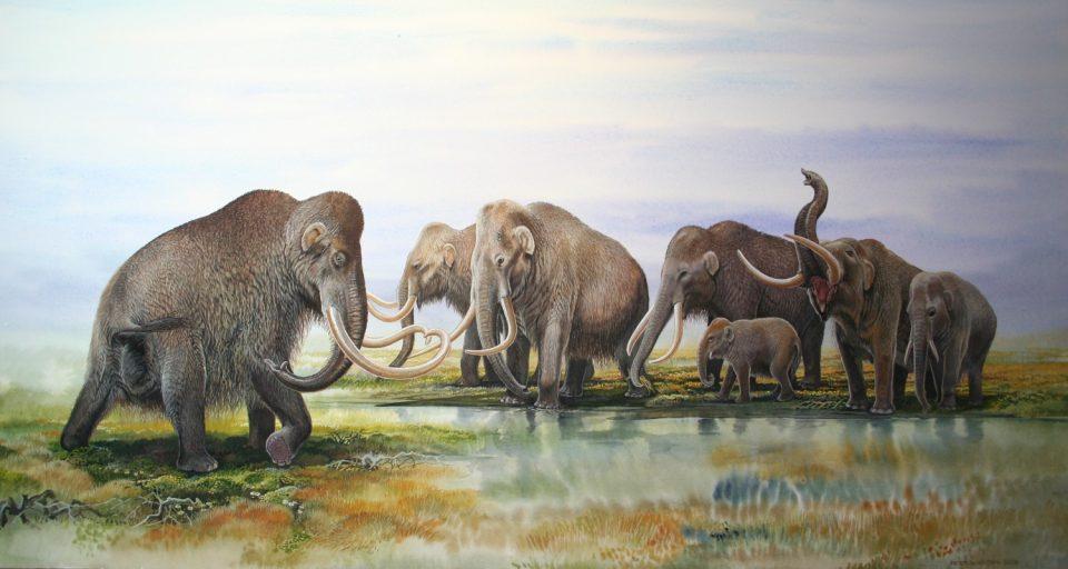 End of Megafauna - Woolly Mammoth