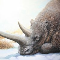 End of the Megafauna - Woolly Rhinoceros