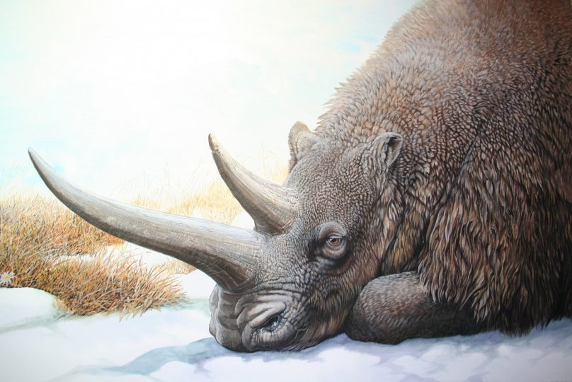 End of the Megafauna - Woolly Rhinoceros