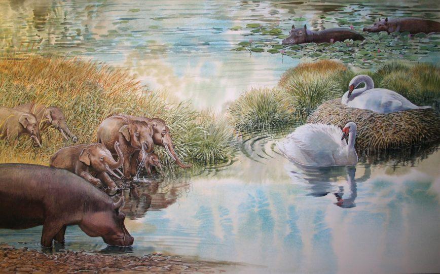 End of the Megafauna - Giant Swan, Dwarf Elephant, Maltese Hippo
