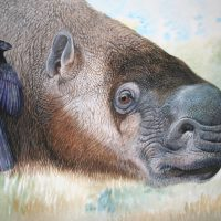 End of the Megafauna - Broad-face Sloth, Smooth-bill Ani