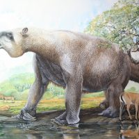 End of the Megafauna - Giant Ground Sloth, Pampas Deer, Common Rhea