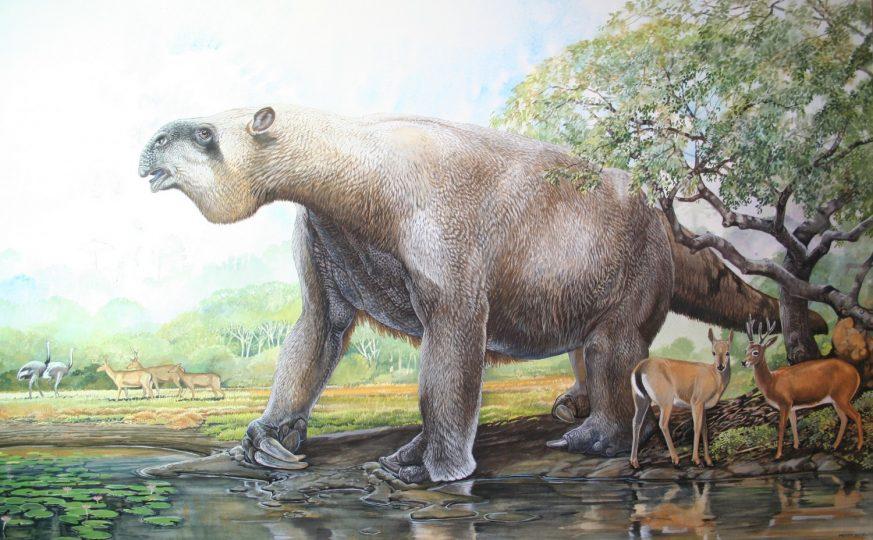End of the Megafauna - Giant Ground Sloth, Pampas Deer, Common Rhea