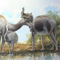 End of the Megafauna - Macrauchenia, Common Rhea