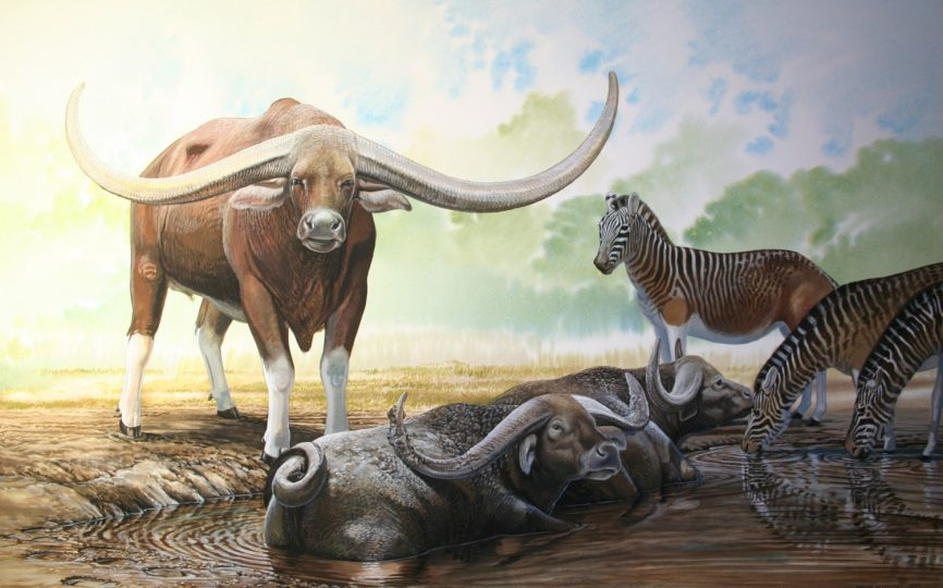 End of the Megafauna - Giant Buffalo, Cape Quagga