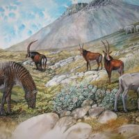 End of the Megafauna - Cape Quagga, Giant Cape Horse, Giant Sable Antelope, Giant Hartebeest, Elephant, White Rhinoceros