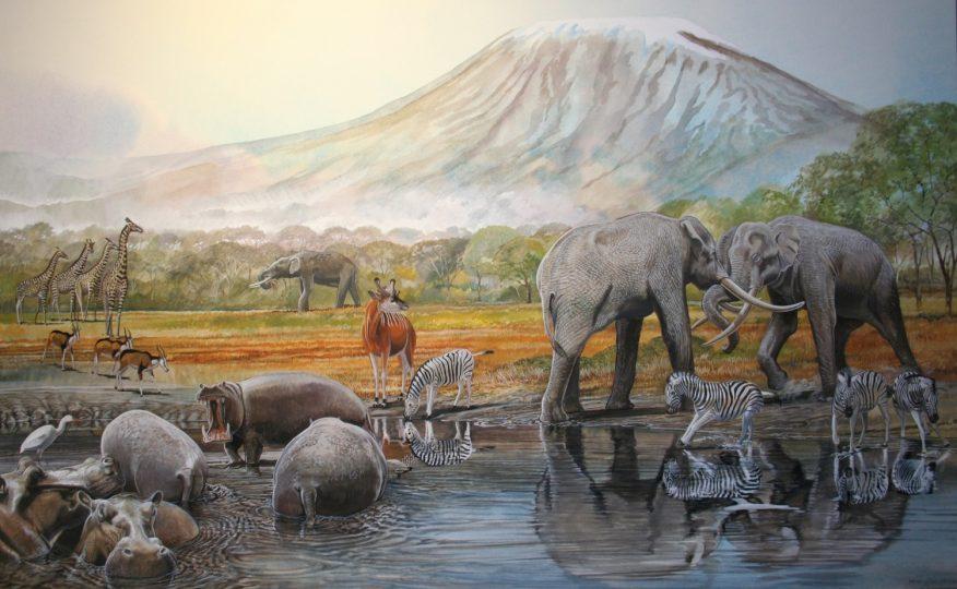 End of the Megafauna - Hippo, Boehm's Zebra, Elephant, Cattle Egret, Giraffe, Antelope, Sivathere
