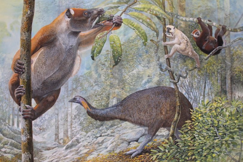 End of the Megafauna - Koala Lemur, Sloth Lemur, Elephant Bird