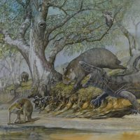 End of the Megafauna - Giant Goanna, Giant Wombat, Short-faced Kangaroo, Zygomaturus, Koala