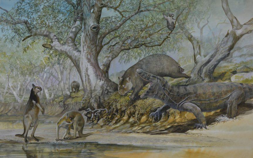 End of the Megafauna - Giant Goanna, Giant Wombat, Short-faced Kangaroo, Zygomaturus, Koala
