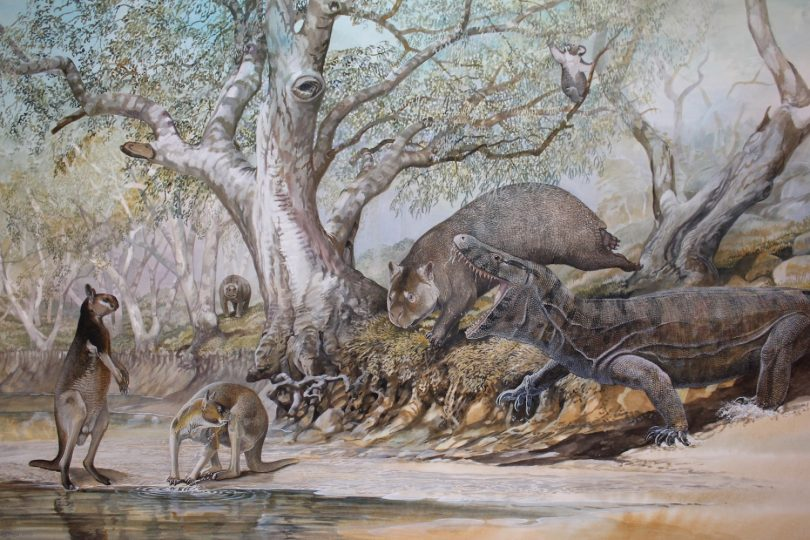 End of the Megafauna - Marsupial Lion, Palorchestes, Tree Kangaroo, Zygomaturus, Land Crocodile, Protemnodon