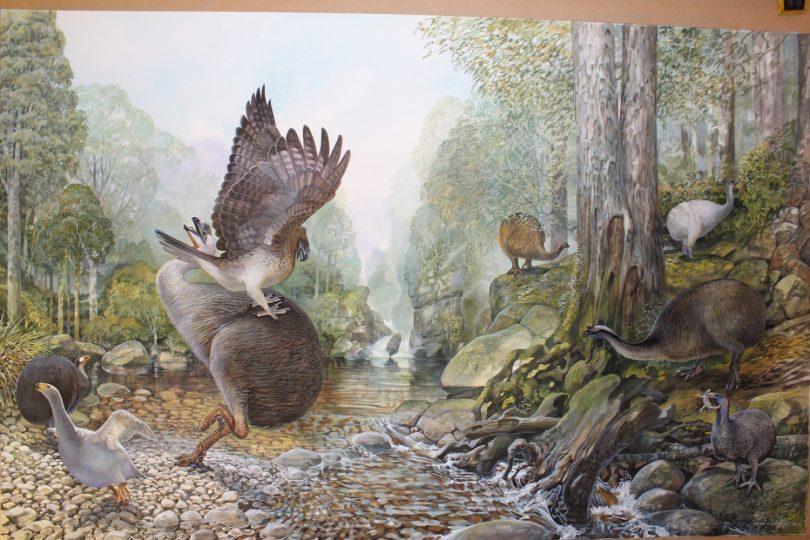 End of the Megafauna - Little Bush Moa, South Island Goose, South Island Giant Moa, Haast's Eagle, Eastern Moa, Stout-legged Moa, Heavy-footed Moa, South Island Adzebill, Gecko