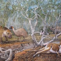 End of the Megafauna - Diprotodon, Giant Short-faced Kangaroo, Giant Tortoise, Wonambi, Genyornis, Major Mitchell Cockatoo, Kookaburra