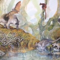 End of the Megafauna - Hulitherium, Thylacine, Protemnodon, Tree Kangaroo, Bulmer's Flying Fox, Bruijn's Long-beaked Echidna