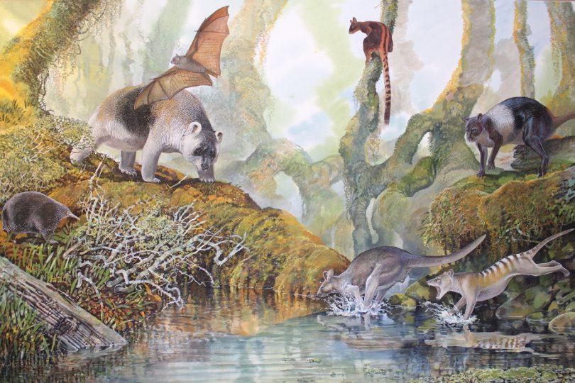 End of the Megafauna - Hulitherium, Thylacine, Protemnodon, Tree Kangaroo, Bulmer's Flying Fox, Bruijn's Long-beaked Echidna