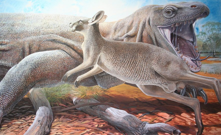 End of the Megafauna - Giant Goanna, Eastern Grey Kangaroo