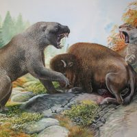 End of the Megafauna - Giant Short-faced Bear, North American Smilodon, Bison